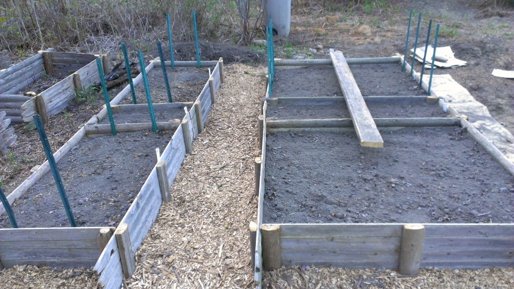 Raised beds made out of old fence panels. These have peas planted.