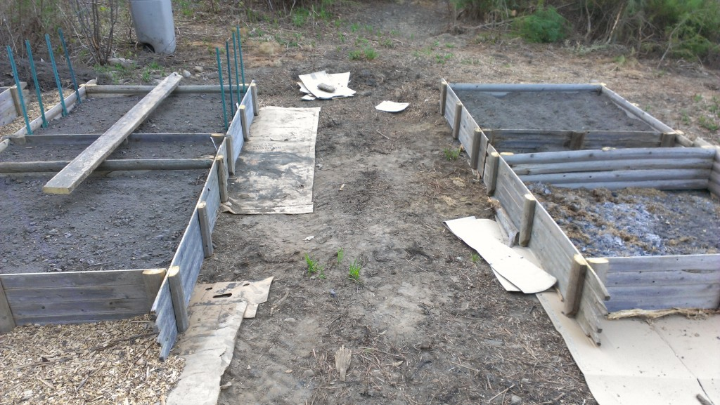Raised beds with a six foot wide gap to allow a tractor through.